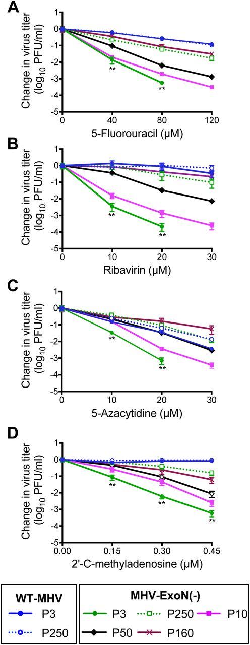 Proofreading-deficient coronaviruses adapt over long-term passage