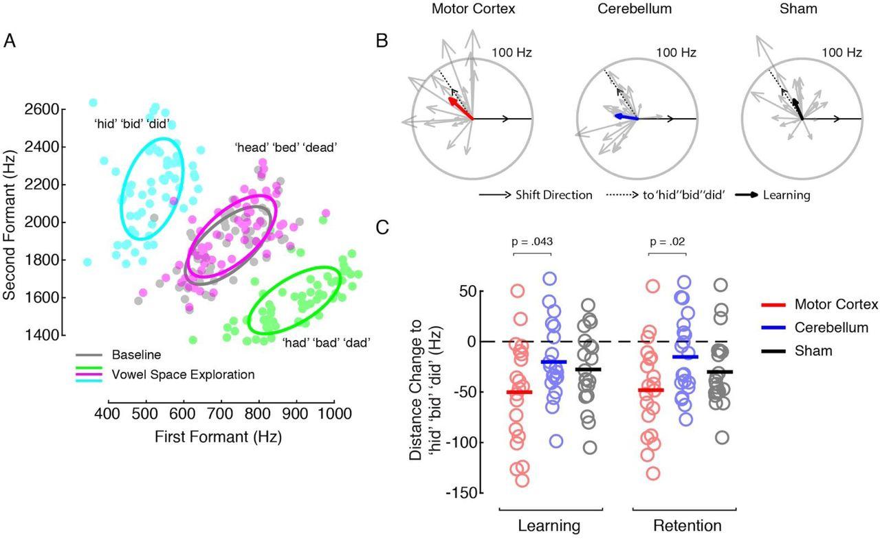 Cortico-Cerebellar Networks Drive Sensorimotor Learning in