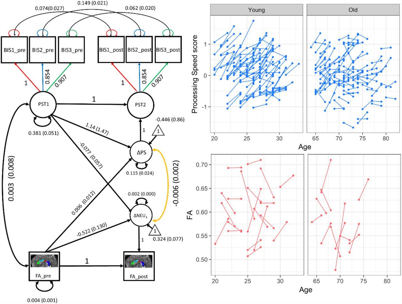 Developmental cognitive neuroscience using Latent Change Score