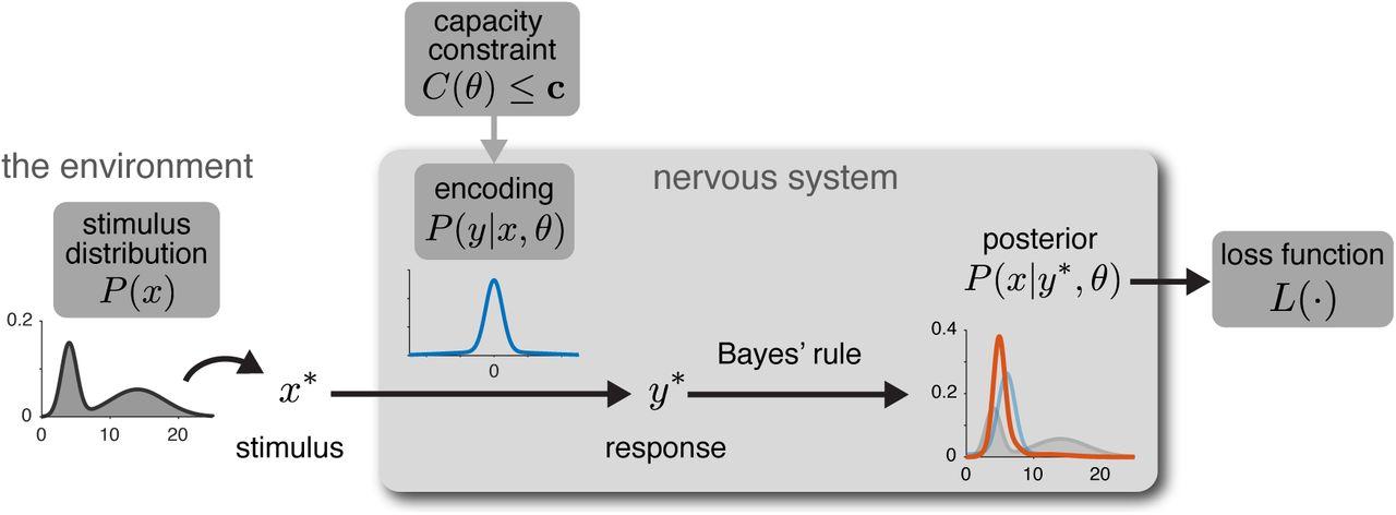 Bayesian Efficient Coding | bioRxiv