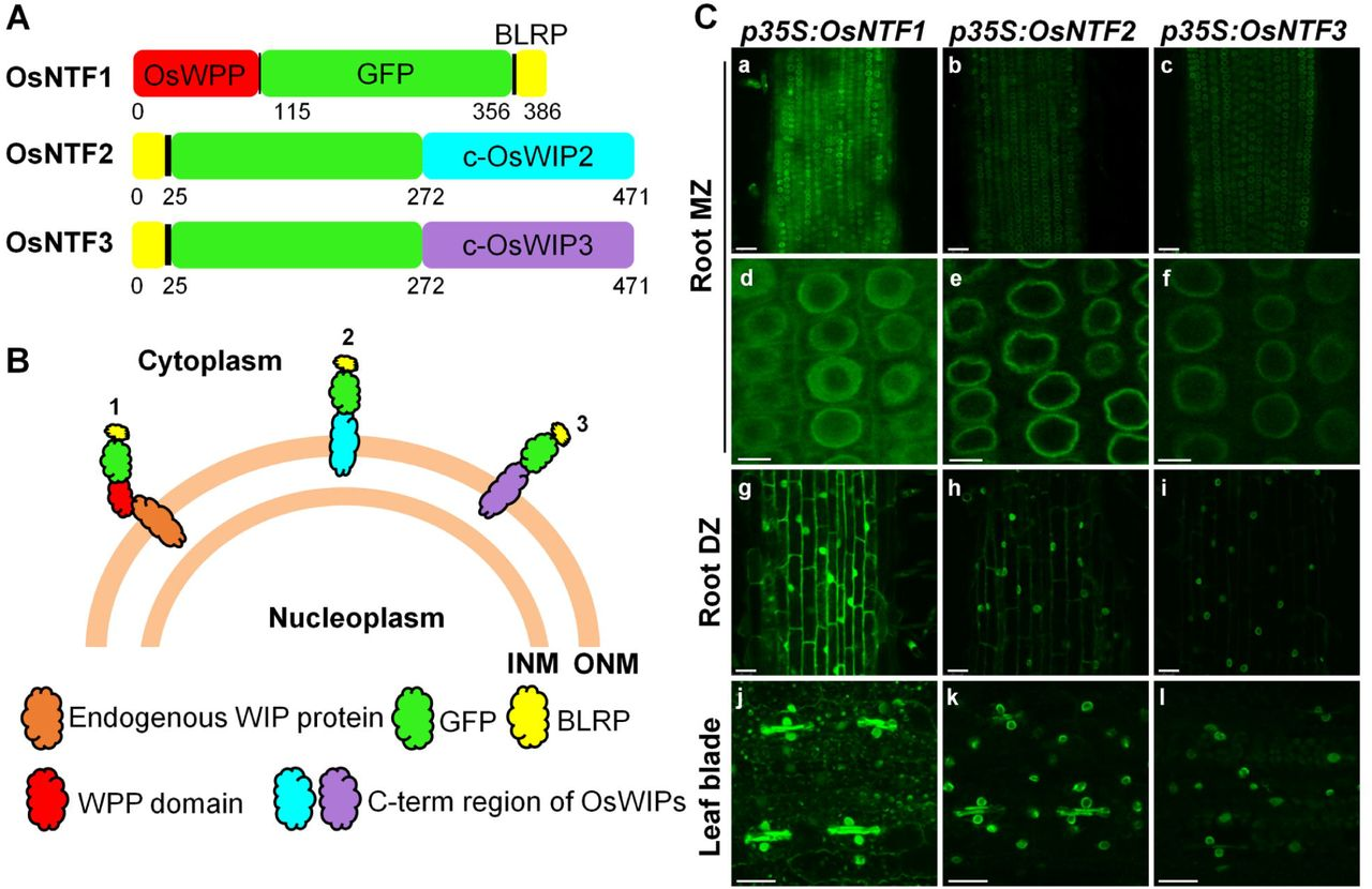 Nuclear transcriptomes at high resolution using retooled INTACT
