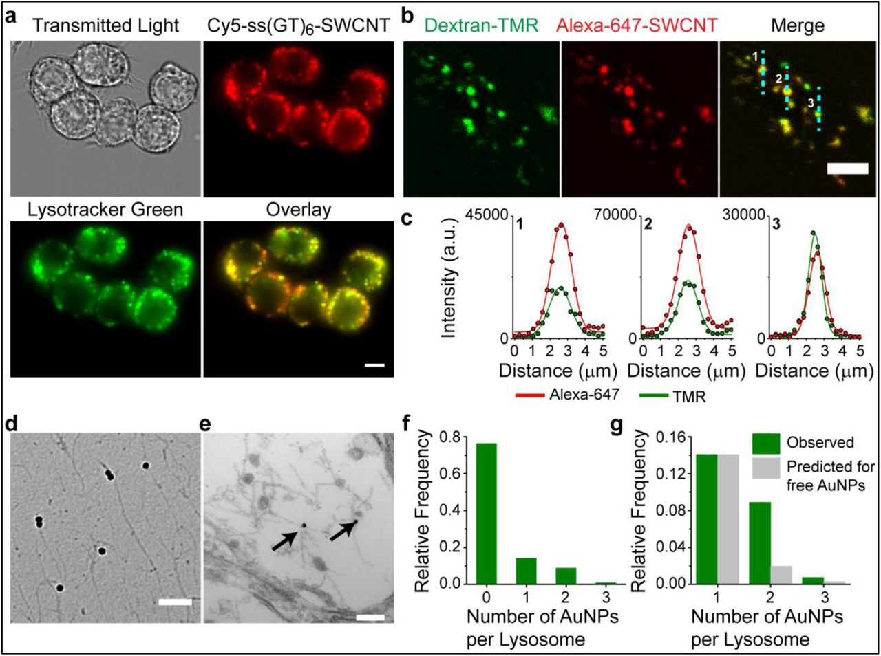 A carbon nanotube optical reporter maps endolysosomal lipid