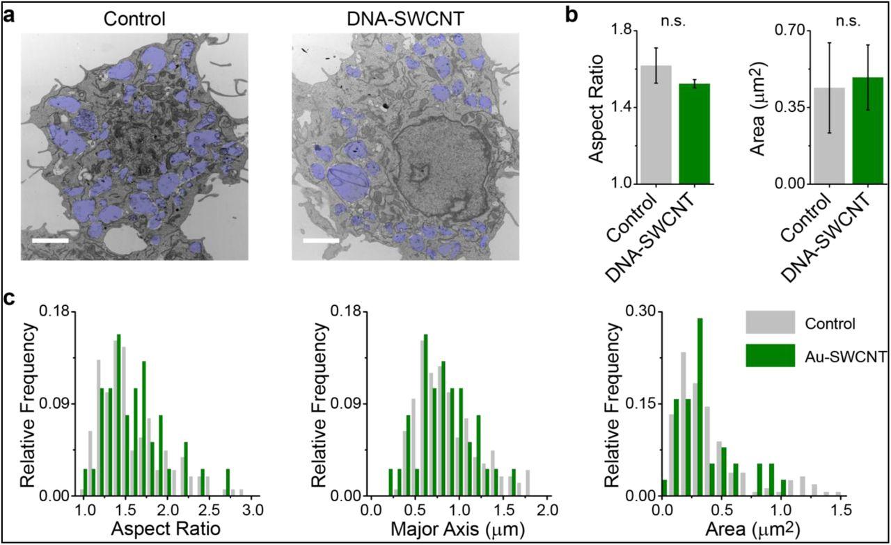 A Carbon Nanotube Optical Reporter Maps Endolysosomal Lipid Flux