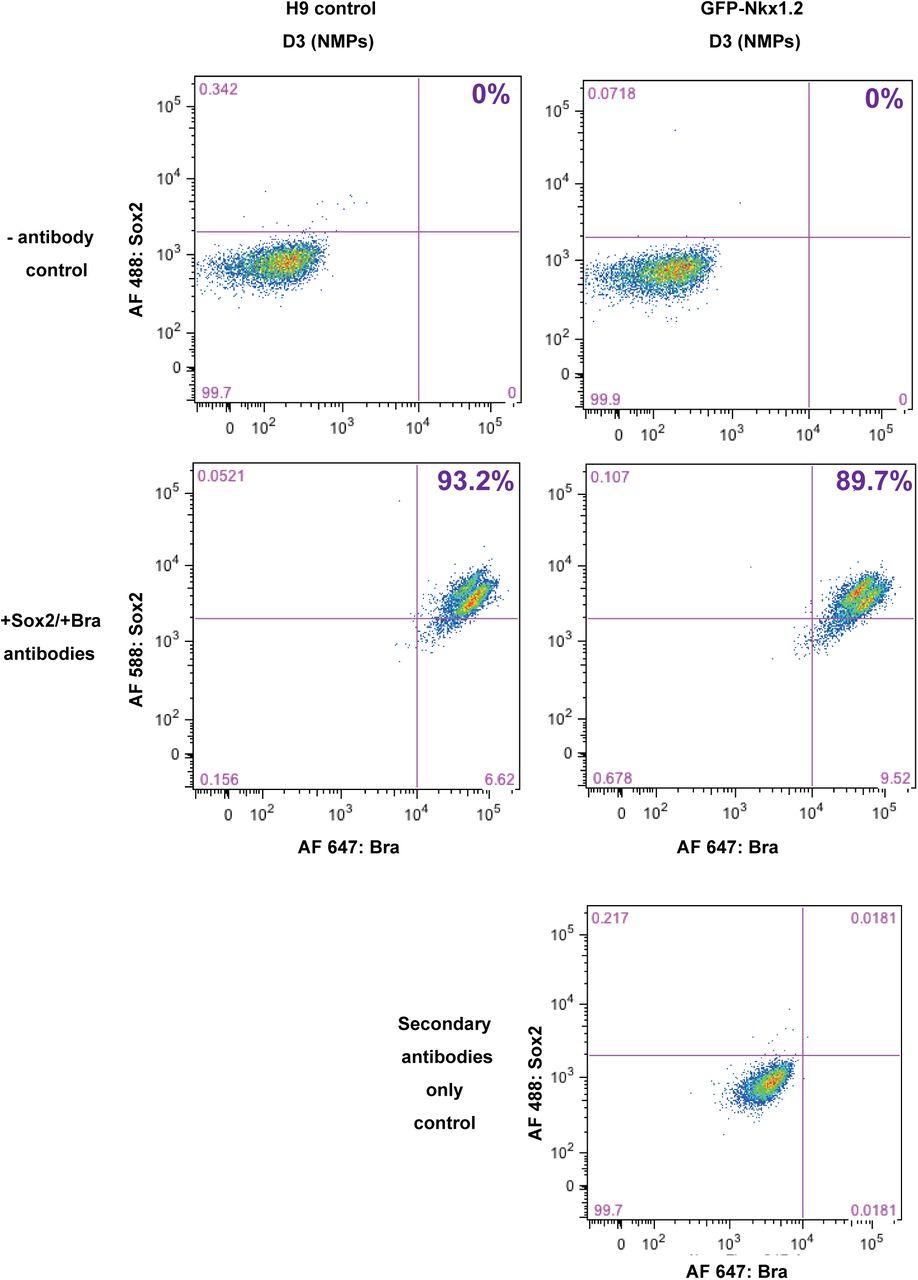 Generation, selection and transcriptomic profiling of human