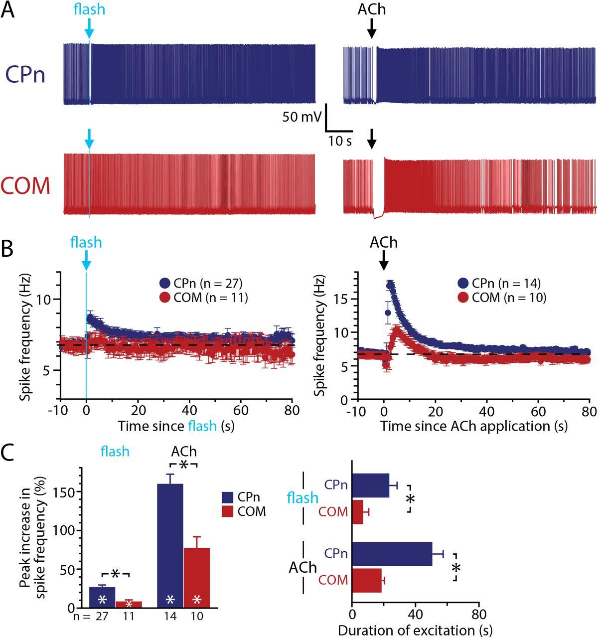 Preferential cholinergic excitation of corticopontine neurons | bioRxiv