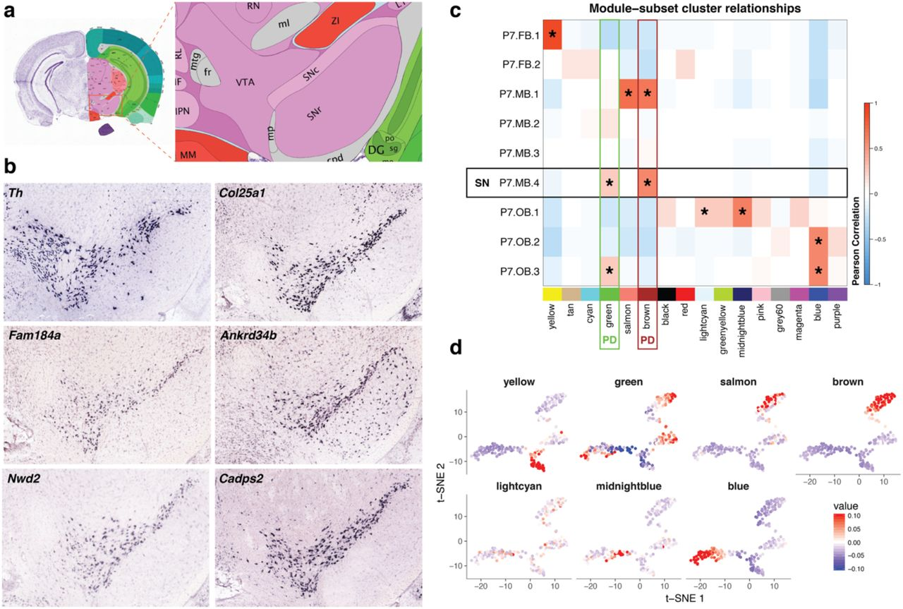 Single-cell RNA-seq of dopaminergic neurons informs