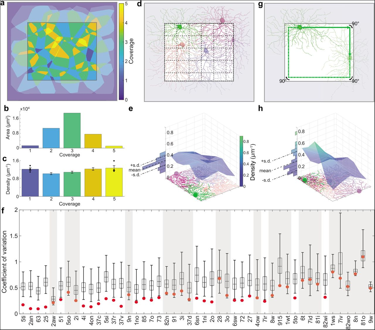 Structural and functional diversity of a dense sample of retinal