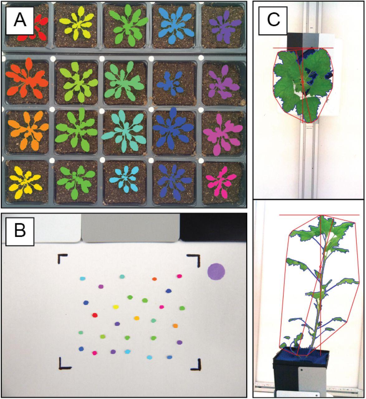 Raspberry Pi Powered Imaging for Plant Phenotyping | bioRxiv