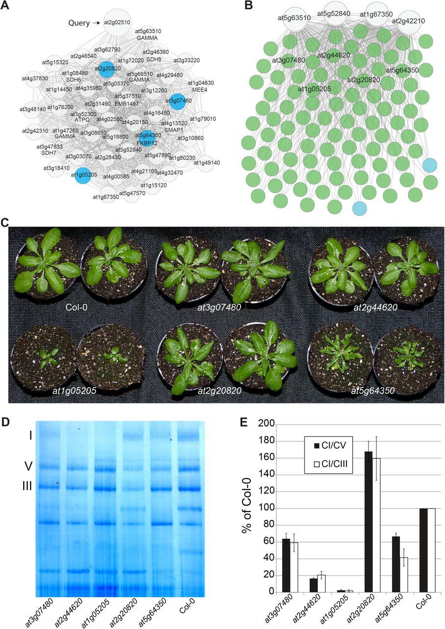 EnsembleNet: ensemble gene function predictions for Arabidopsis