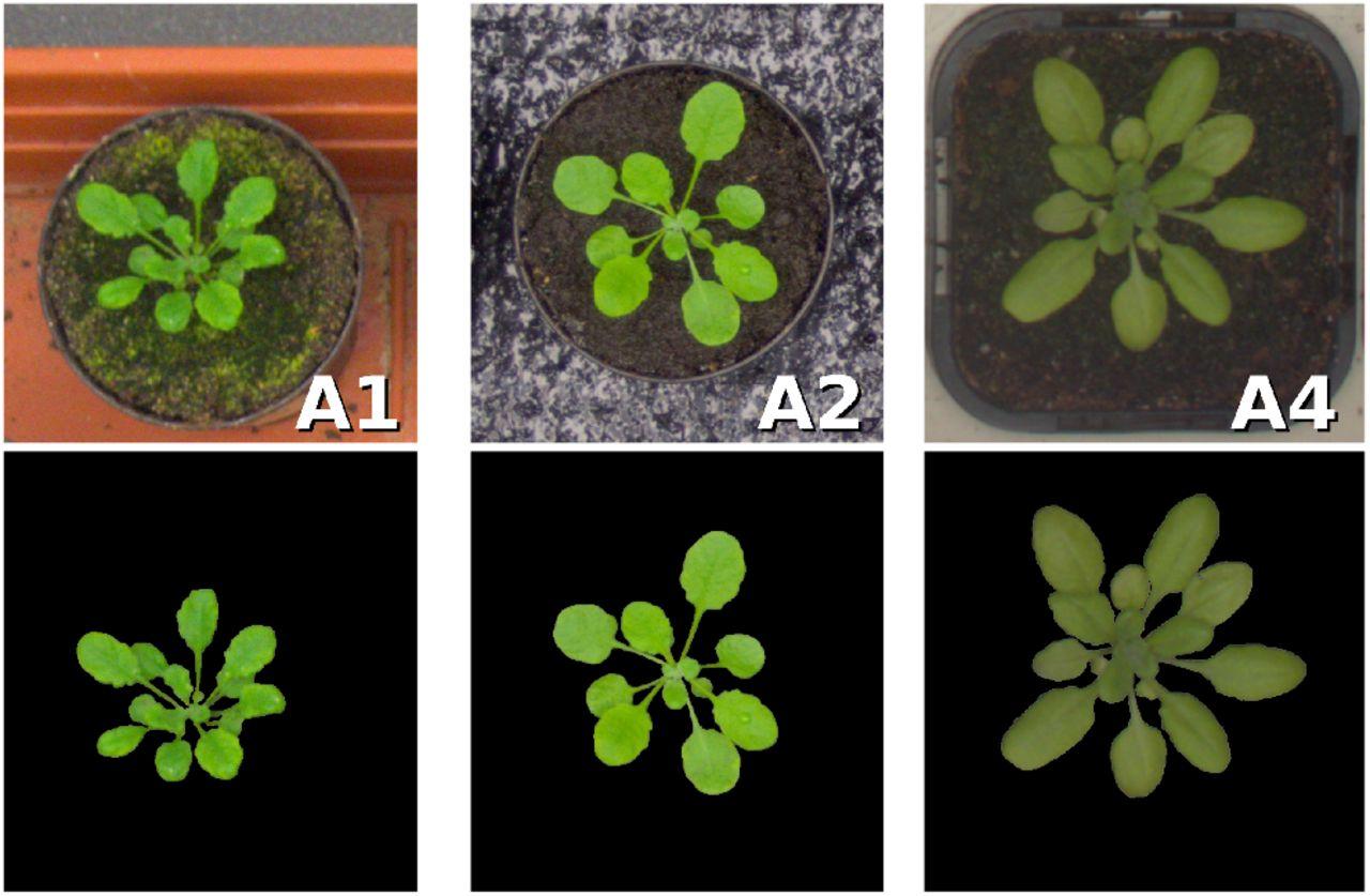 ARIGAN: Synthetic Arabidopsis Plants using Generative Adversarial