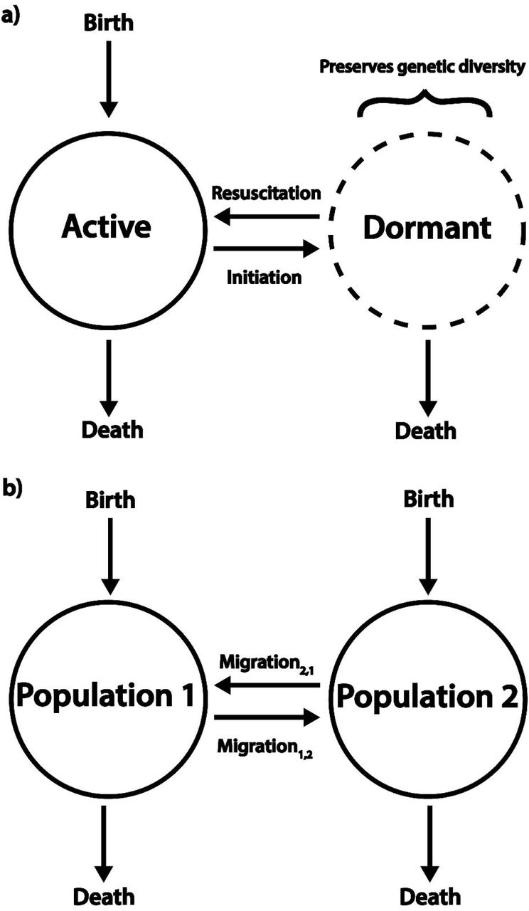Evolution with a seed bank: the population genetic consequences of