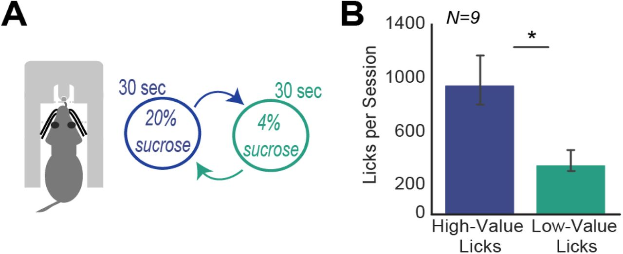 Medial Frontal Theta Is Entrained To The Lick Cycle | bioRxiv