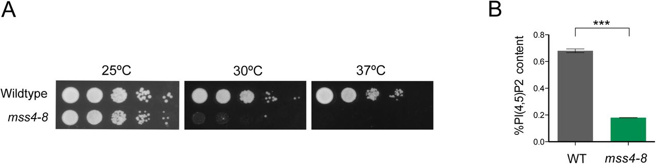 Cell size and growth rate are modulated by TORC2-dependent