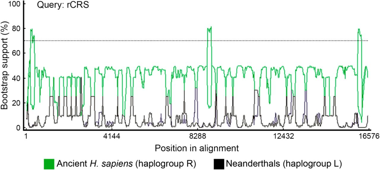 Differential distribution of Neandertal genomic signatures