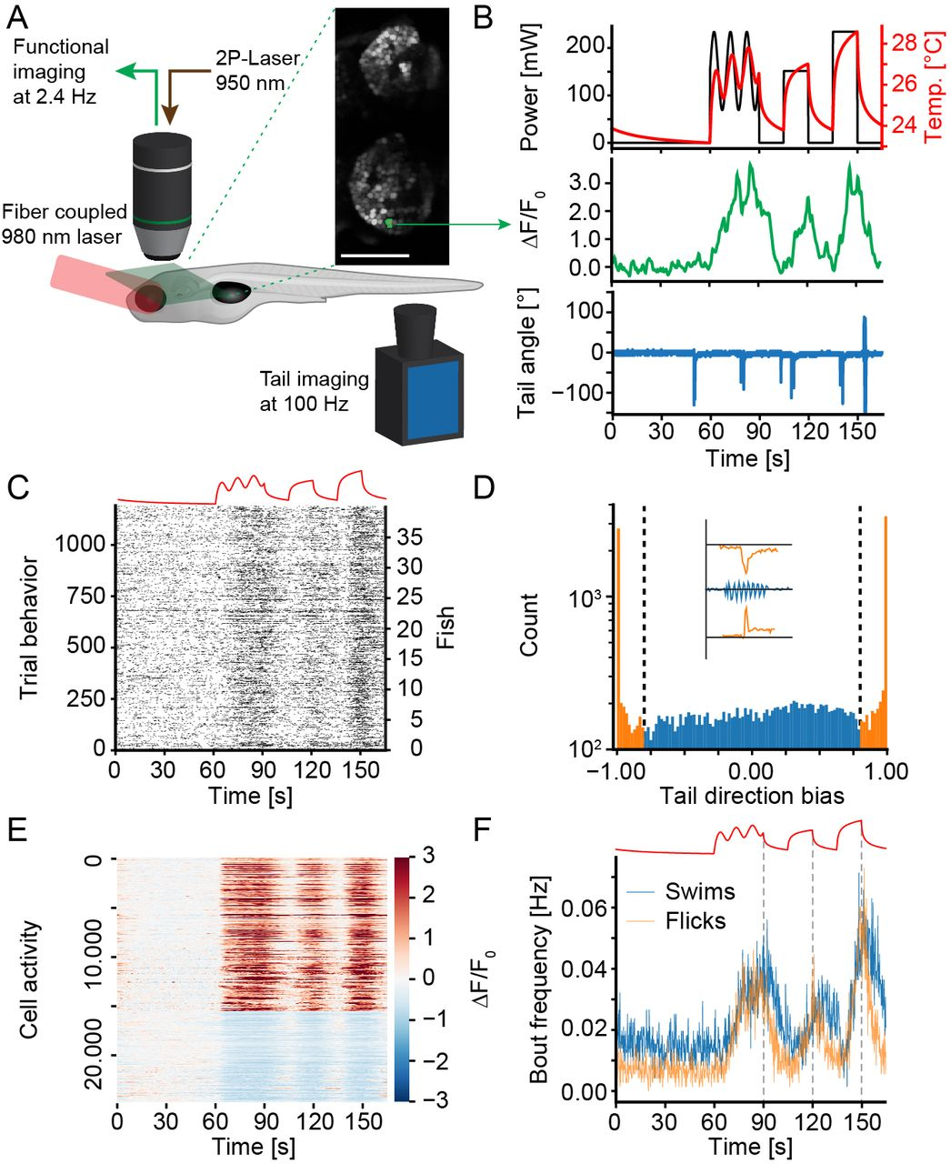 A brain wide circuit model of heat evoked swimming behavior in