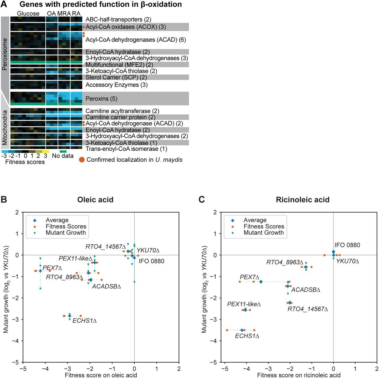 Functional genomics of lipid metabolism in the oleaginous