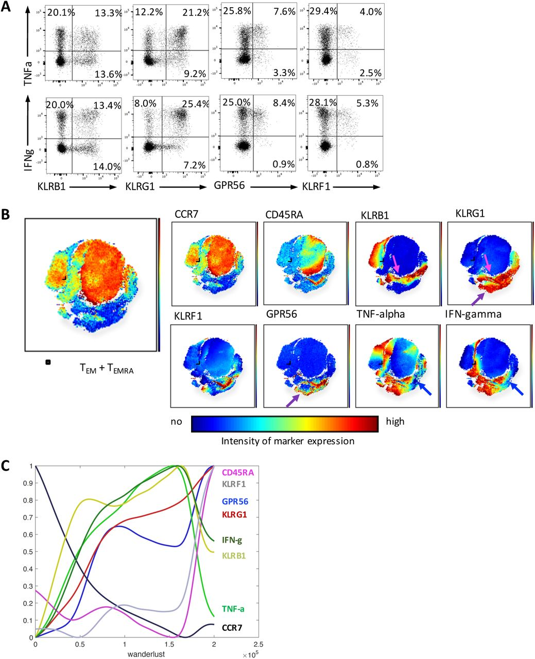 Progressive change in expression of killer-like receptorsr ... on