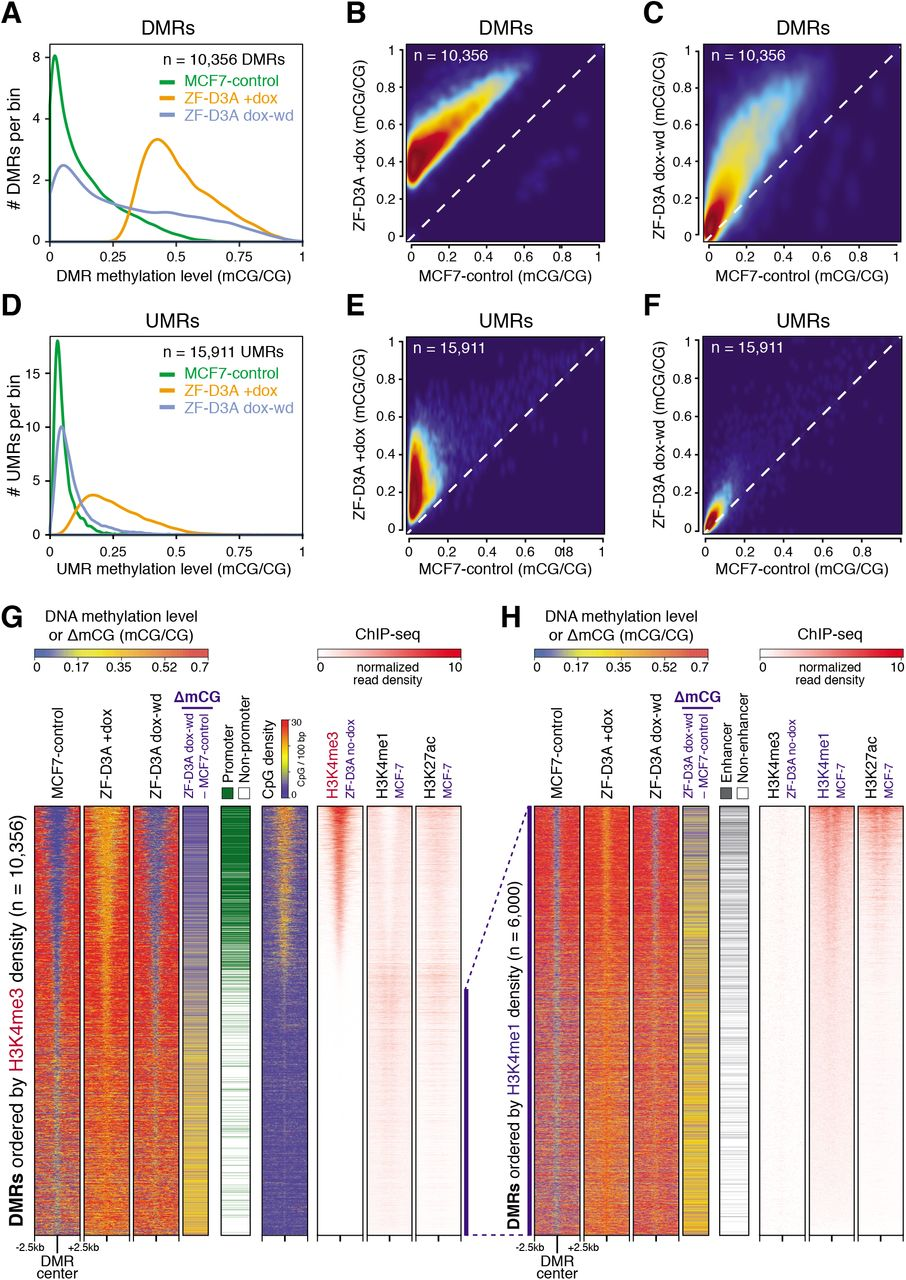 Frequent lack of repressive capacity of promoter DNA methylation
