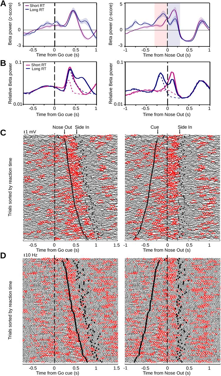 Sensorimotor processing in the basal ganglia leads to transient beta