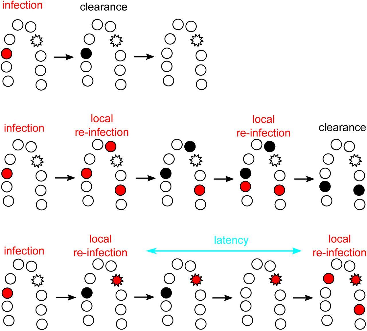 Why human papillomavirus acute infections matter | bioRxiv