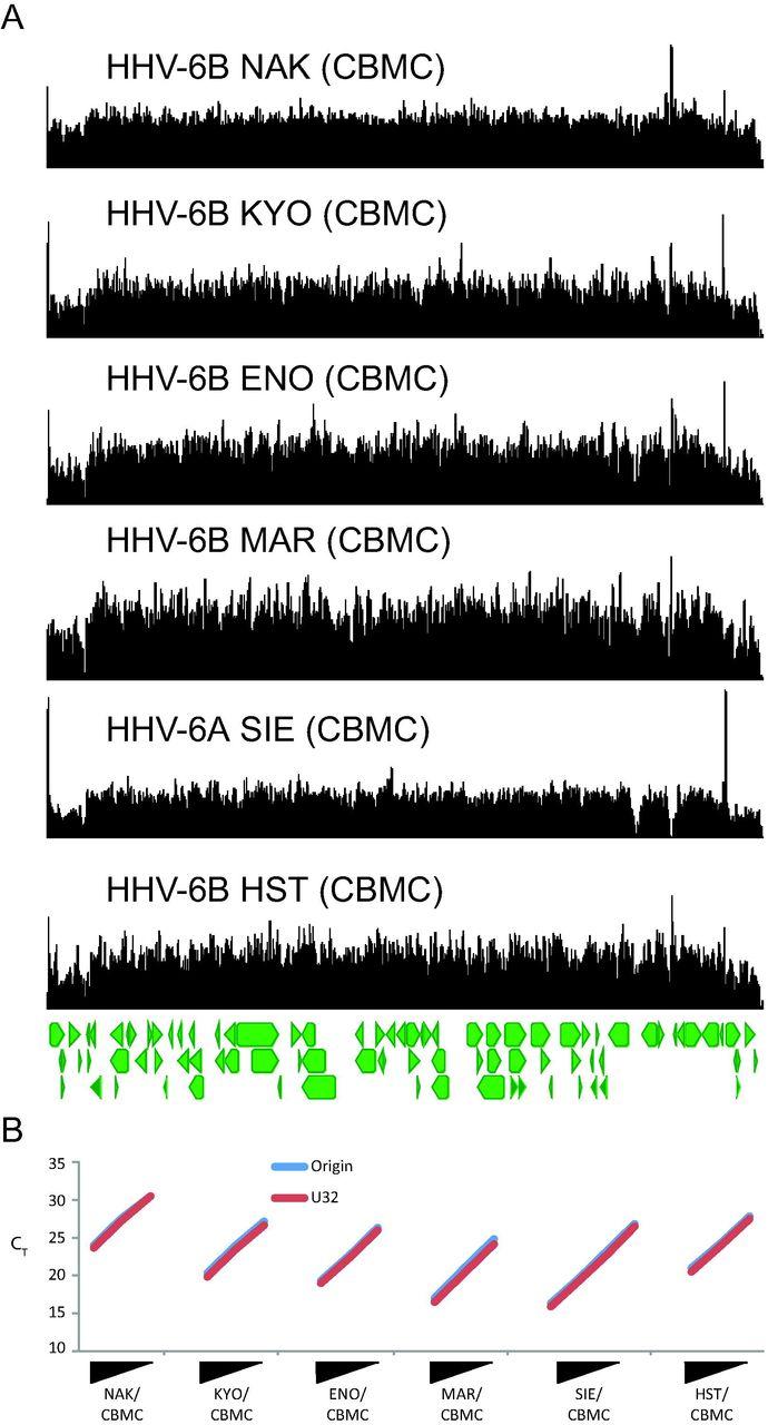 Copy number heterogeneity, large origin tandem repeats, and