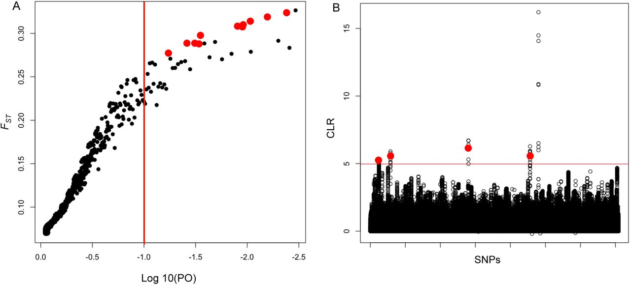 b37f95d9 Signatures of positive selection and local adaptation to ...