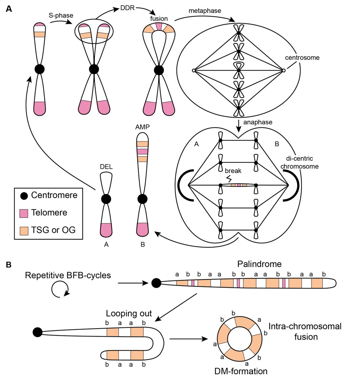 Reconstructing the Molecular Life History of Gliomas | bioRxiv