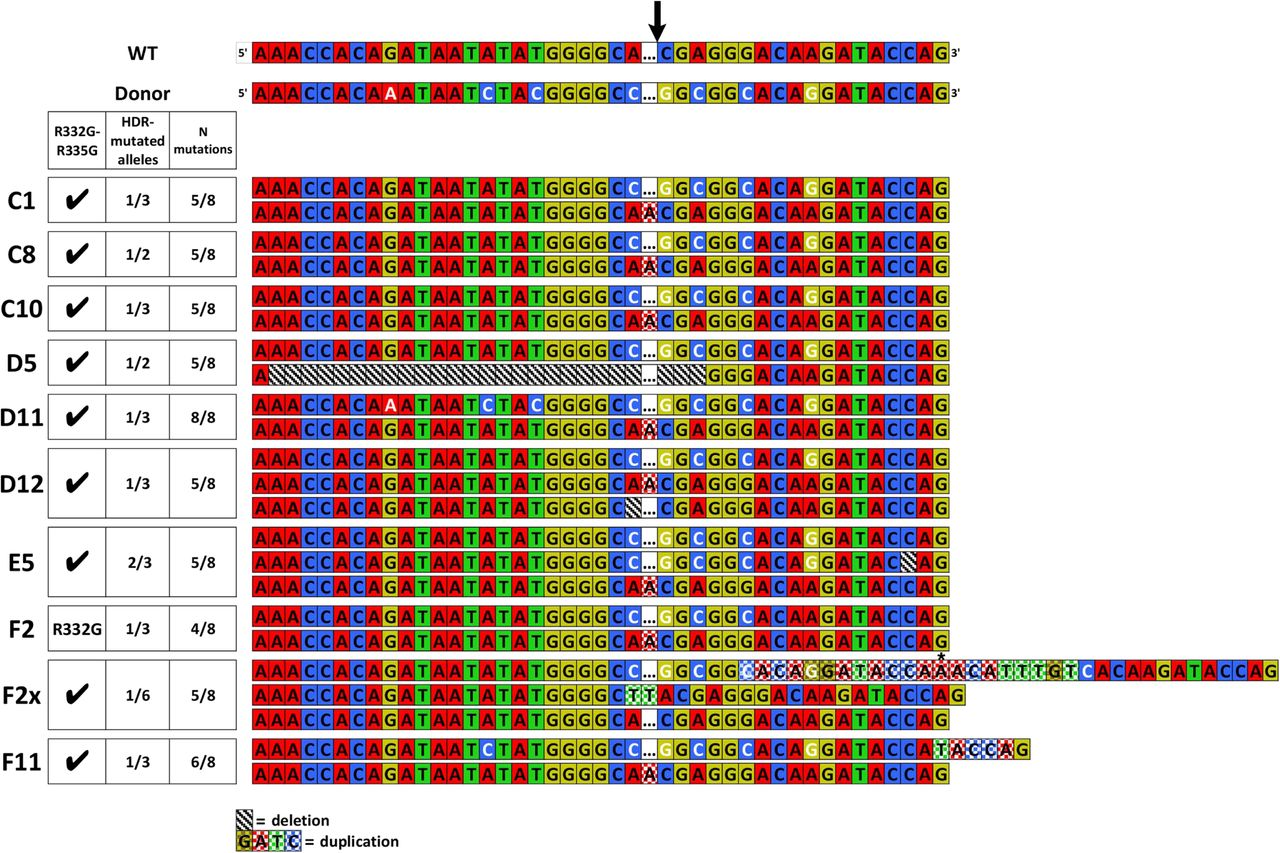 Editing of the Human TRIM5 Gene to Introduce Mutations with