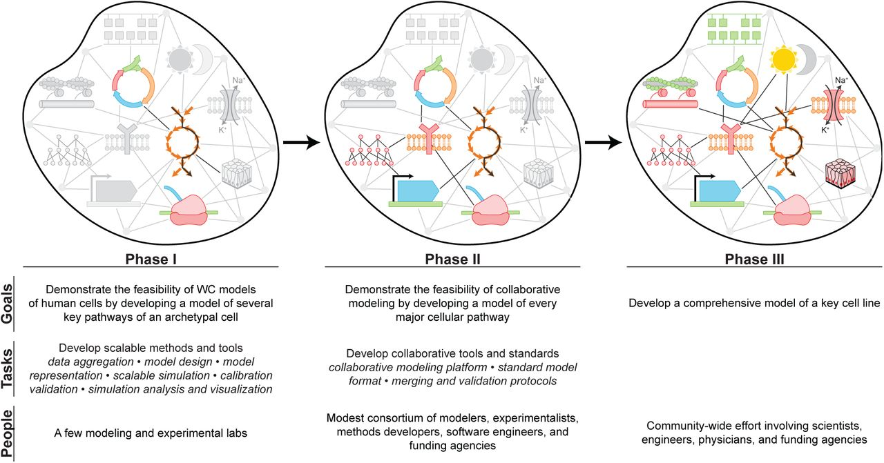 A blueprint for human whole-cell modeling | bioRxiv