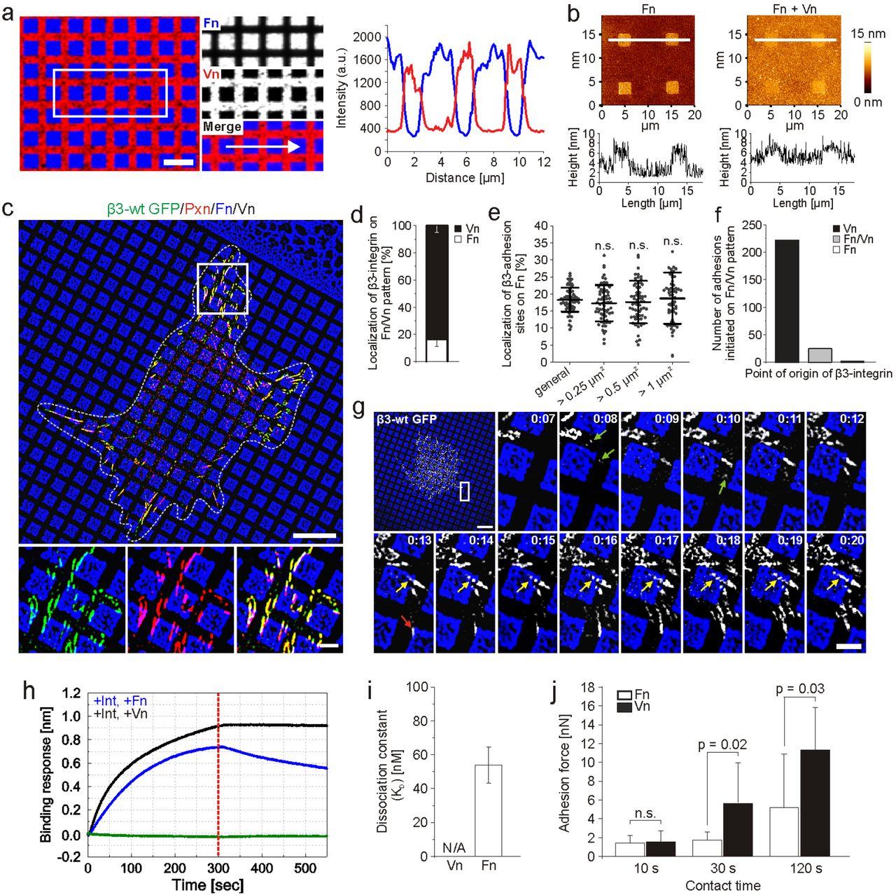 Force-dependent ligand sensing enables αVβ3 integrin to