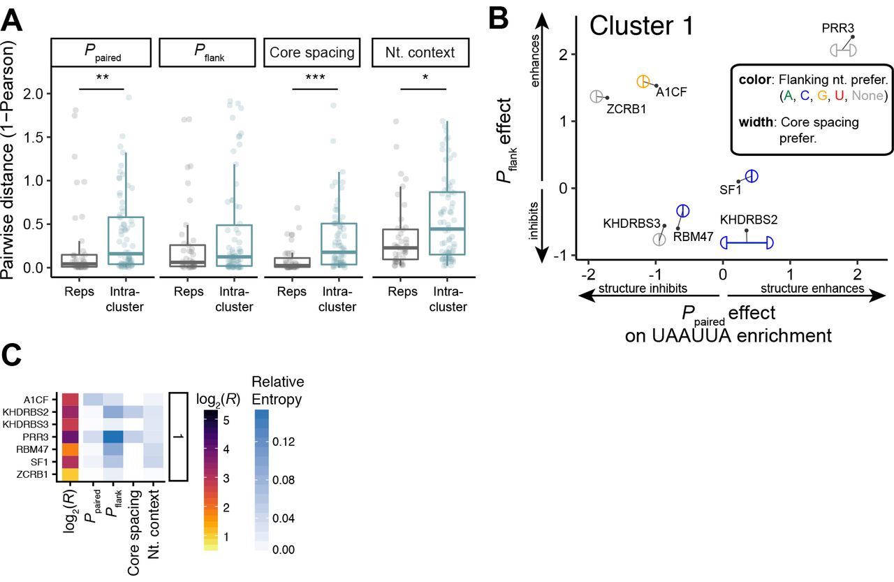 Sequence, Structure and Context Preferences of Human RNA