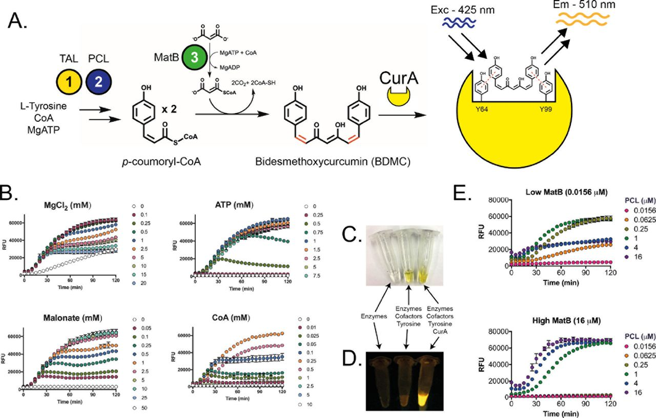 A cell-free synthetic biochemistry platform for raspberry ketone