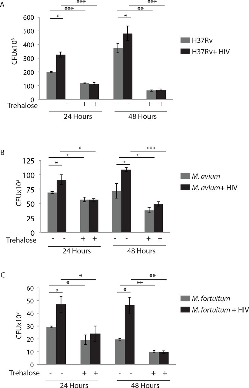 Induction of autophagy by trehalose limits opportunistic