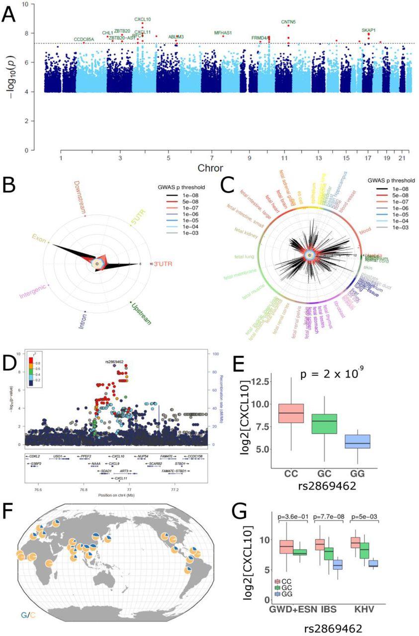 An atlas of genetic variation for linking pathogen-induced cellular