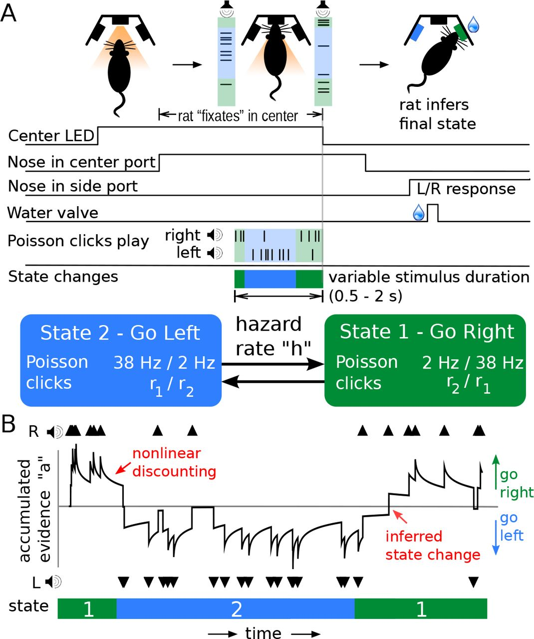 Rats optimally accumulate and discount evidence in a dynamic