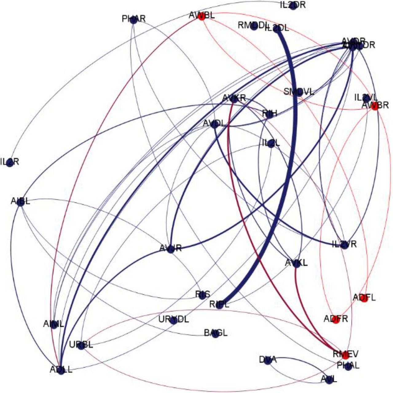 Wiring Diagram Adjacency Matrix C Elegans
