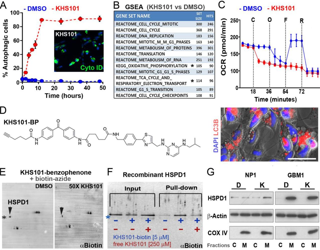 The small molecule KHS101 induces bioenergetic dysfunction in
