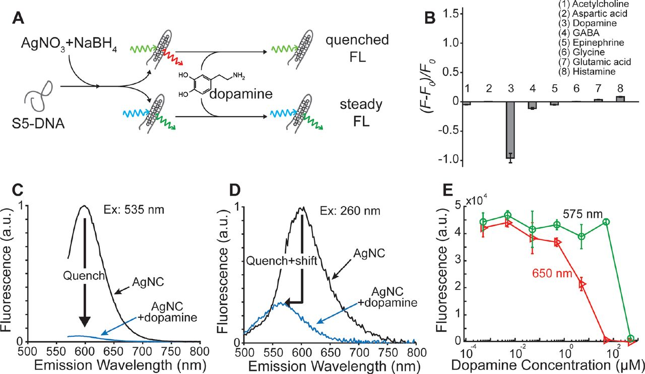 DNA-stabilized silver nanoclusters as specific, ratiometric