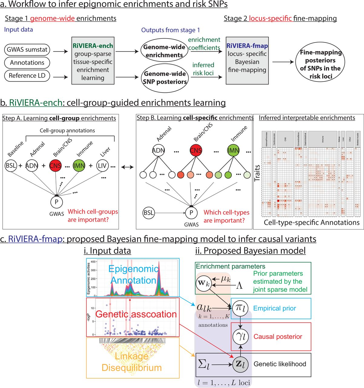 A probabilistic framework to dissect functional cell-type-specific