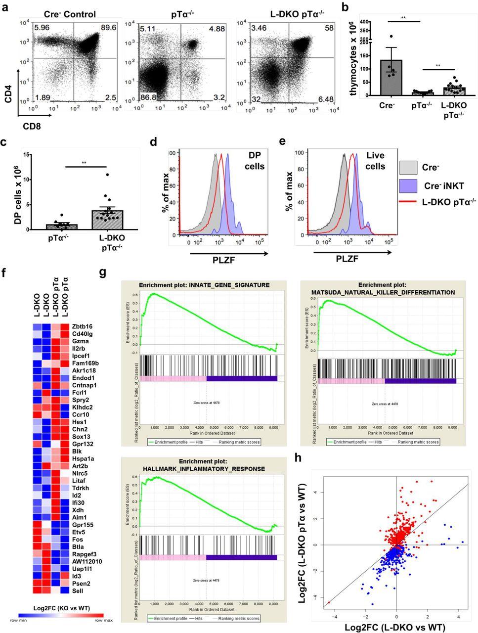 Id proteins suppress E2A-driven innate-like T cell development prior