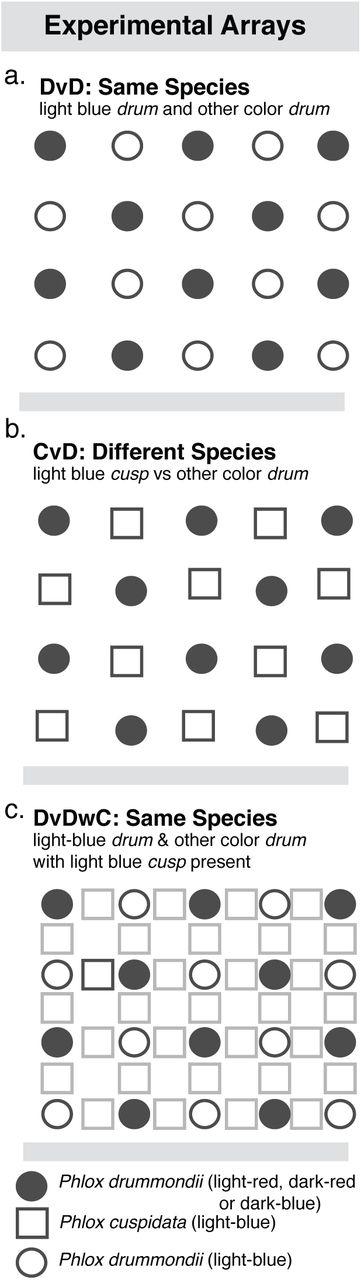 Variation in context dependent foraging behavior across pollinators