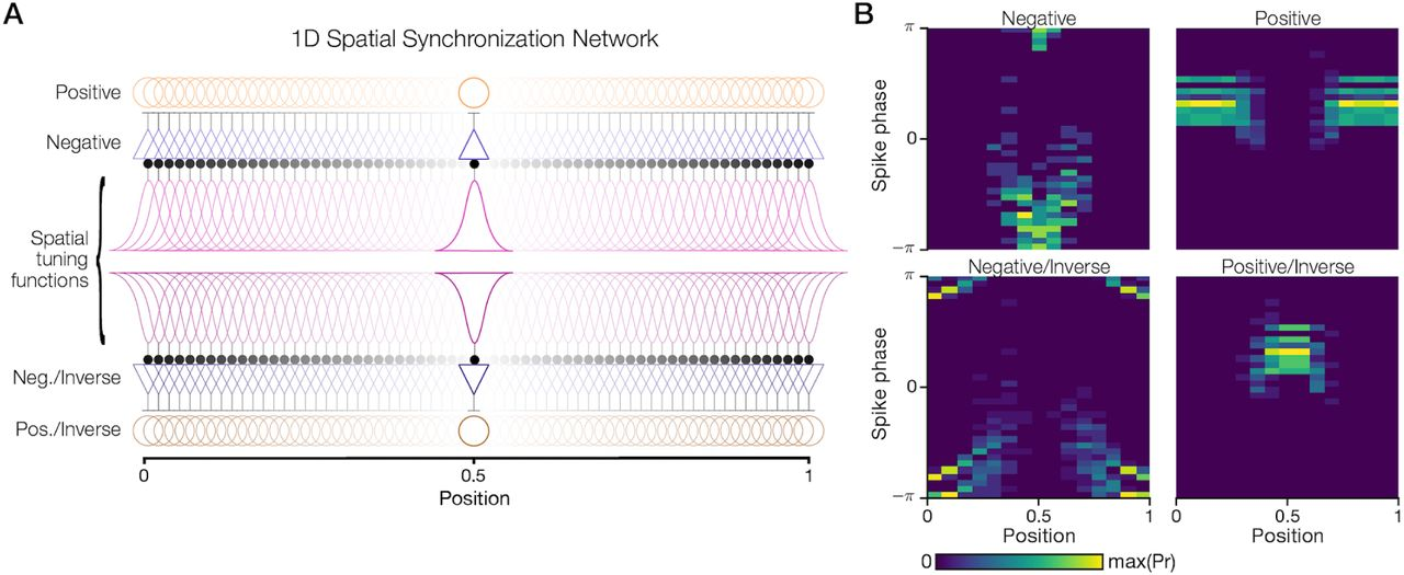 Spatial Theta Cells in Competitive Burst Synchronization Networks
