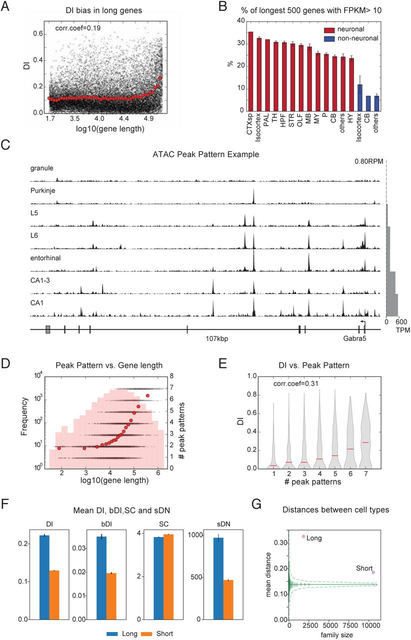 The Transcriptional Logic of Mammalian Neuronal Diversity