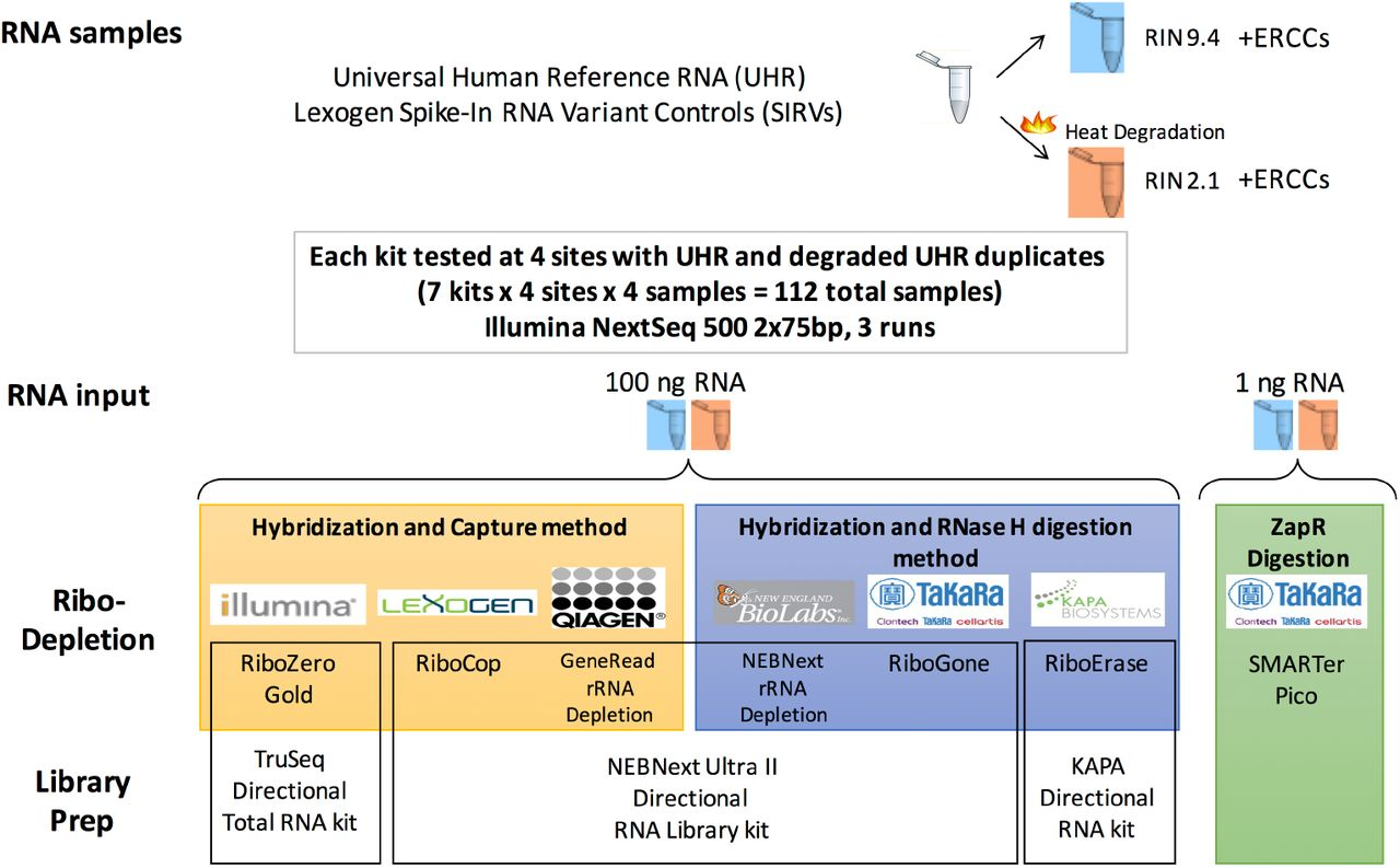 Cross-Site Comparison of Ribosomal Depletion Kits for Illumina