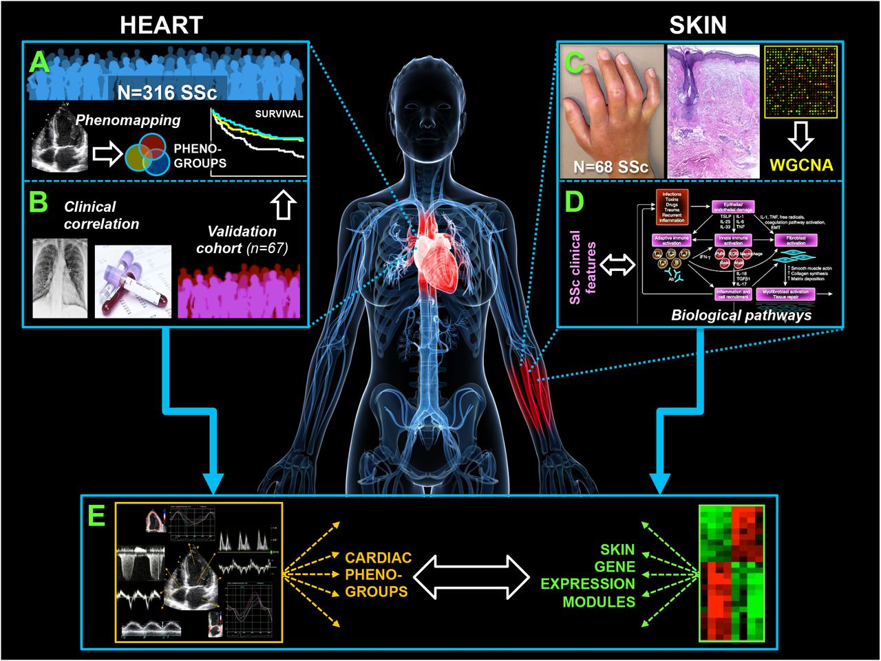 Machine Learning of the Cardiac Phenome and Skin