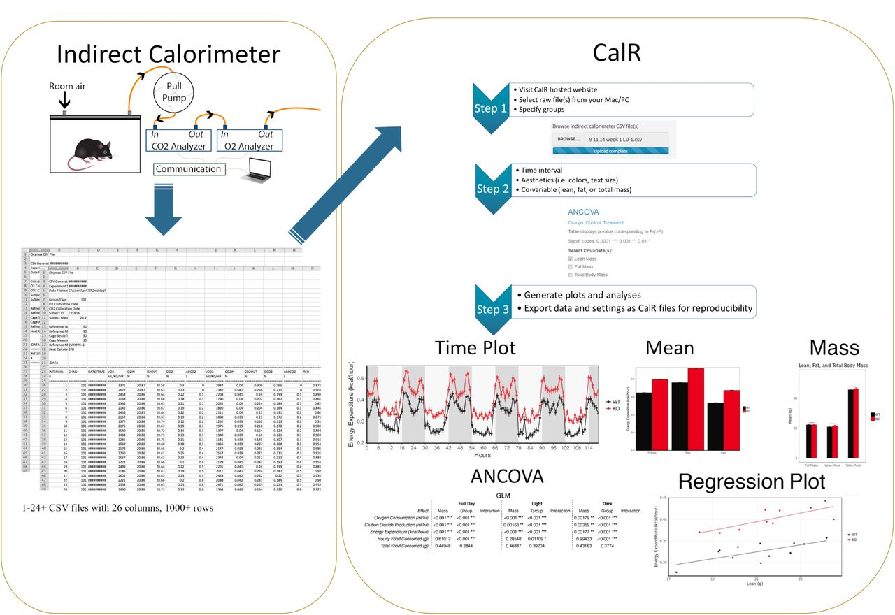 CalR: A Web-based Analysis Tool for Indirect Calorimetry