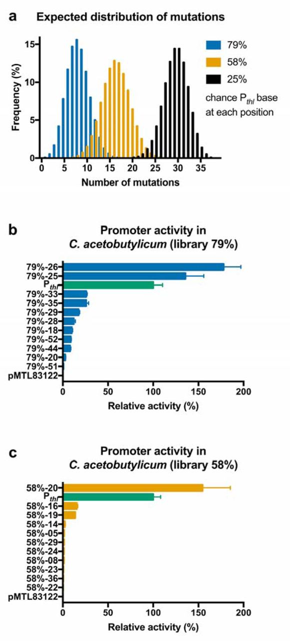 insertion mutation inactive promoter