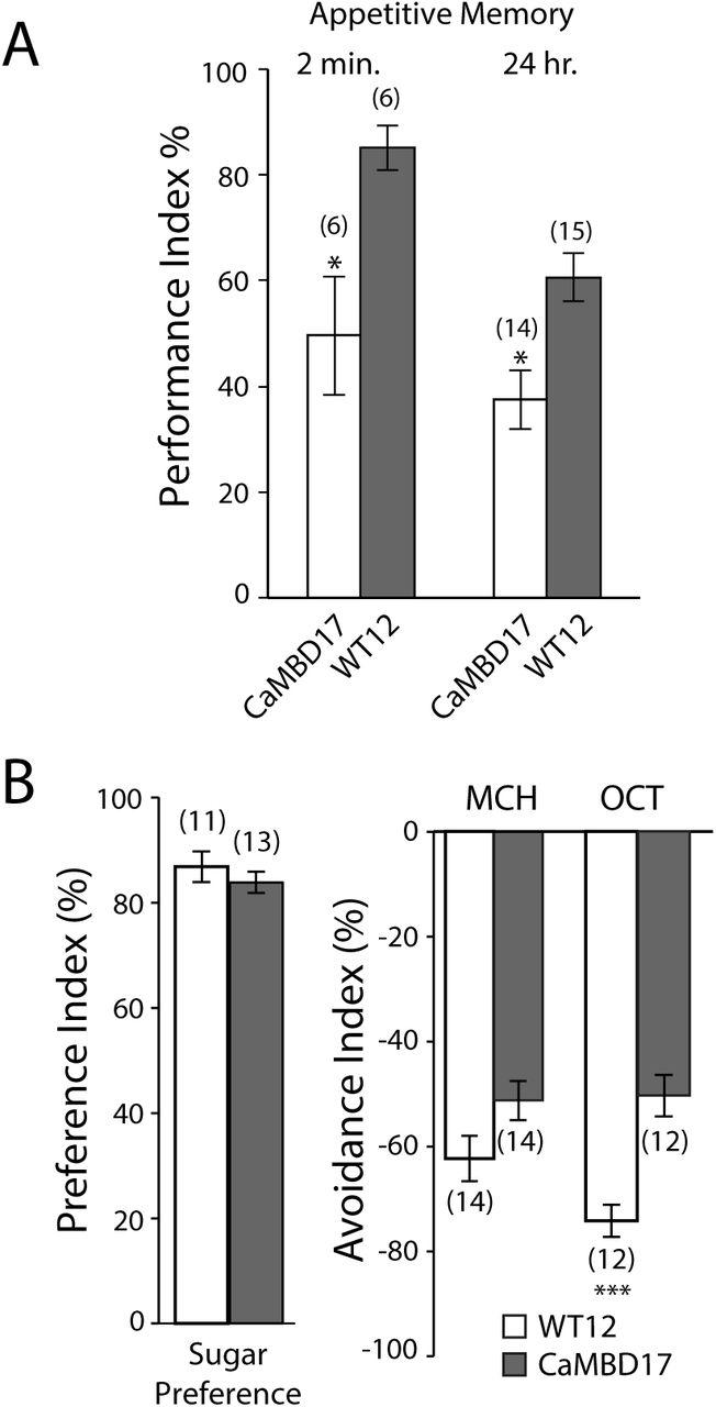 Regulation of Eag by calcium/calmodulin controls presynaptic