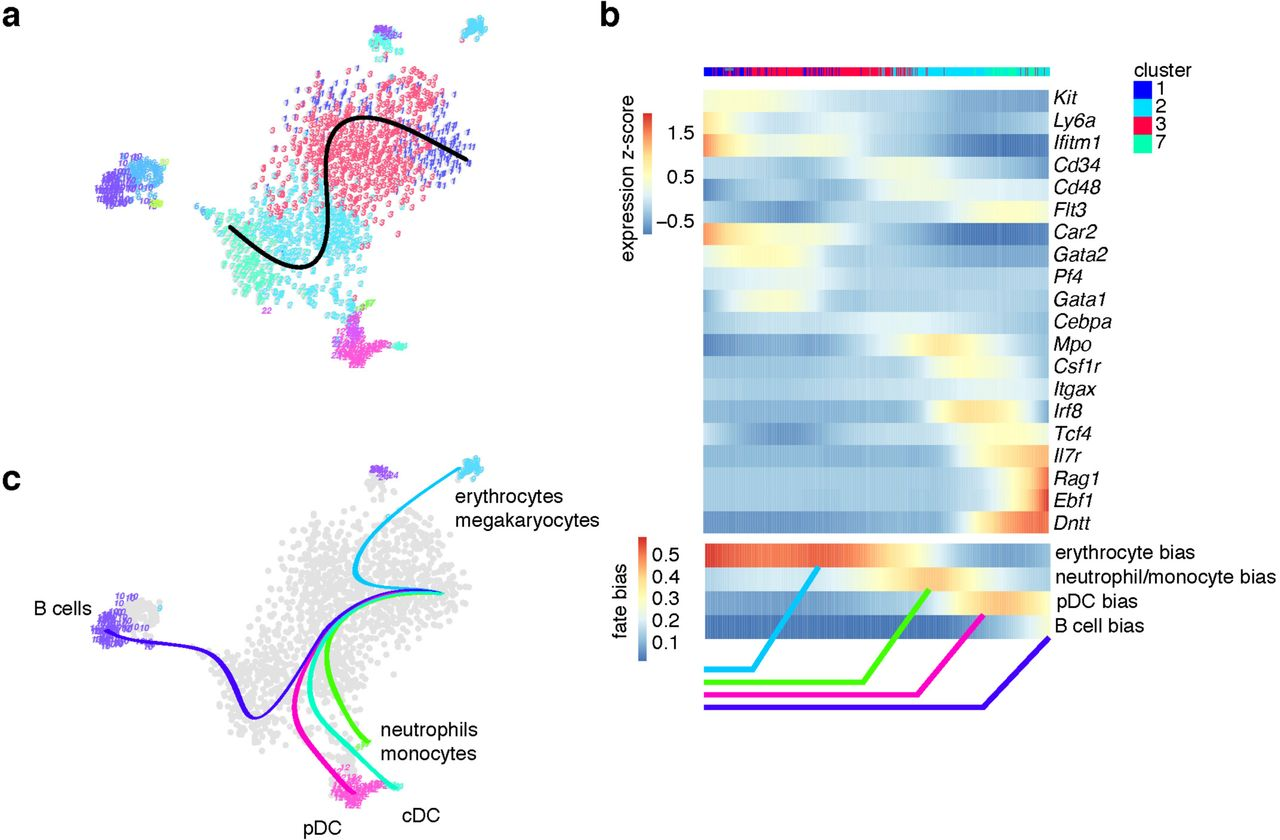 FateID infers cell fate bias in multipotent progenitors from
