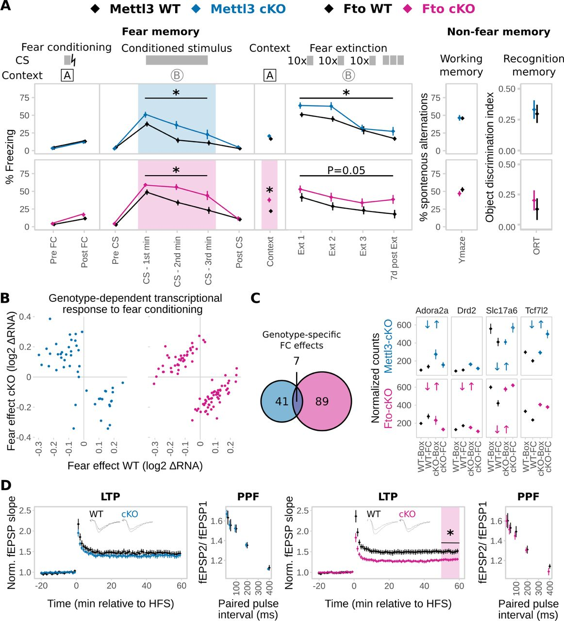 The role of m6A-RNA methylation in stress response